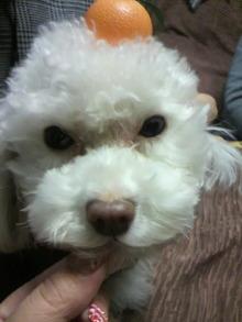 愛犬鈴ちゃんのライフスタイルブログ-2011010320100000.jpg