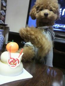 愛犬鈴ちゃんのライフスタイルブログ-2011010320130000.jpg