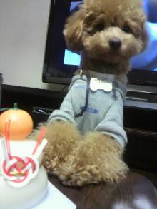 愛犬鈴ちゃんのライフスタイルブログ-2011010320130003.jpg