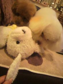愛犬鈴ちゃんのライフスタイルブログ-2011010521480002.jpg