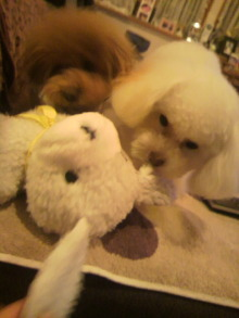 愛犬鈴ちゃんのライフスタイルブログ-2011010521480003.jpg