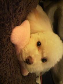 愛犬鈴ちゃんのライフスタイルブログ-2011010600190001.jpg