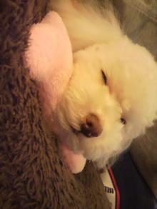 愛犬鈴ちゃんのライフスタイルブログ-2011010600190002.jpg
