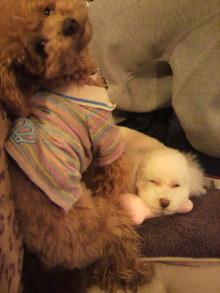 愛犬鈴ちゃんのライフスタイルブログ-2011010600200002.jpg