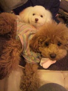 愛犬鈴ちゃんのライフスタイルブログ-2011010600210000.jpg