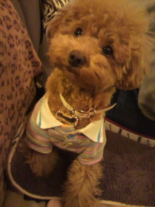 愛犬鈴ちゃんのライフスタイルブログ-2011010600220003.jpg