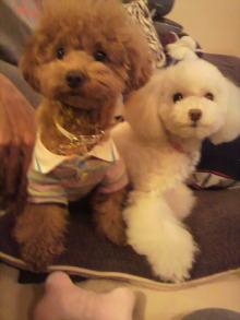 愛犬鈴ちゃんのライフスタイルブログ-2011010600220000.jpg