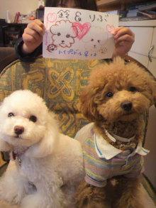 愛犬鈴ちゃんのライフスタイルブログ-2011010615280000.jpg