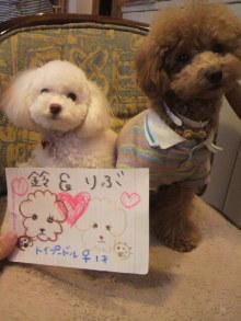 愛犬鈴ちゃんのライフスタイルブログ-2011010615290001.jpg