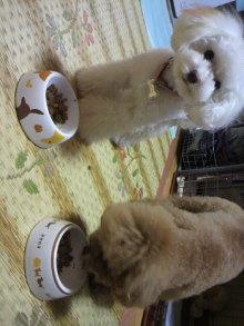 愛犬鈴ちゃんのライフスタイルブログ-2011010721160002.jpg