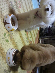 愛犬鈴ちゃんのライフスタイルブログ-2011010721160000.jpg