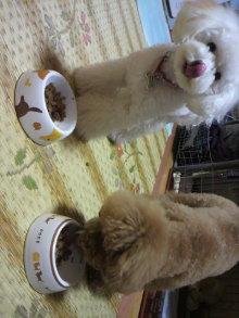 愛犬鈴ちゃんのライフスタイルブログ-2011010721160001.jpg