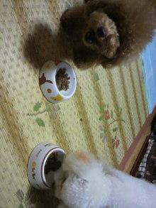 愛犬鈴ちゃんのライフスタイルブログ-2011010721160005.jpg