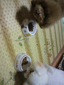 愛犬鈴ちゃんのライフスタイルブログ-2011010721160003.jpg