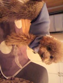愛犬鈴ちゃんのライフスタイルブログ-2011011016150002.jpg