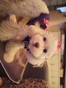 愛犬鈴ちゃんのライフスタイルブログ-2011011016170000.jpg