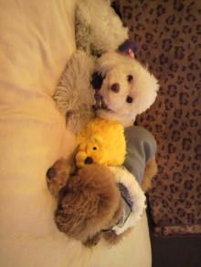 愛犬鈴ちゃんのライフスタイルブログ-2011011016180000.jpg