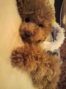 愛犬鈴ちゃんのライフスタイルブログ-2011011016210000.jpg