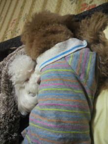 愛犬鈴ちゃんのライフスタイルブログ-2011010922380001.jpg