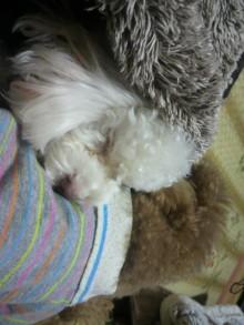 愛犬鈴ちゃんのライフスタイルブログ-2011010922380002.jpg