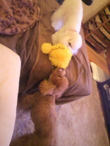 愛犬鈴ちゃんのライフスタイルブログ-2011013019260002.jpg