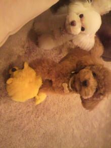 愛犬鈴ちゃんのライフスタイルブログ-2011013019260000.jpg