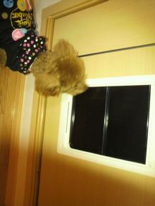 愛犬鈴ちゃんのライフスタイルブログ-2011020122470000.jpg