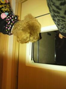 愛犬鈴ちゃんのライフスタイルブログ-2011020122470001.jpg