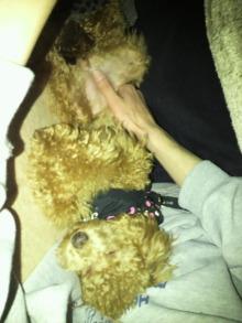 愛犬鈴ちゃんのライフスタイルブログ-2011020123160001.jpg