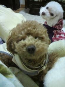愛犬鈴ちゃんのライフスタイルブログ-2011021020040001.jpg