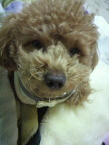 愛犬鈴ちゃんのライフスタイルブログ-2011021020030001.jpg