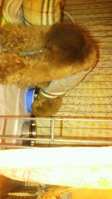 愛犬鈴ちゃんのライフスタイルブログ-2011021400000001.jpg