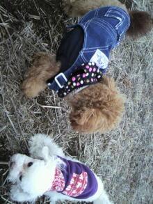 愛犬鈴ちゃんのライフスタイルブログ-2011021915390002.jpg