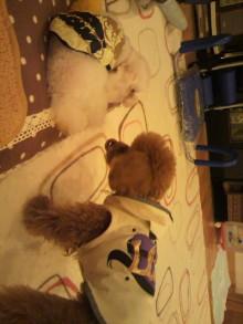 愛犬鈴ちゃんのライフスタイルブログ-2011022120440000.jpg