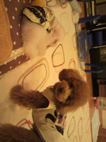 愛犬鈴ちゃんのライフスタイルブログ-2011022120440001.jpg