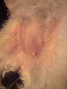 愛犬鈴ちゃんのライフスタイルブログ-2010112719290001.jpg