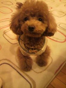 愛犬鈴ちゃんのライフスタイルブログ-2011022120520000.jpg