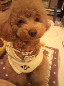 愛犬鈴ちゃんのライフスタイルブログ-2011022120530002.jpg