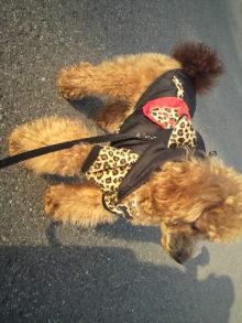 愛犬鈴ちゃんのライフスタイルブログ-2011022315450000.jpg