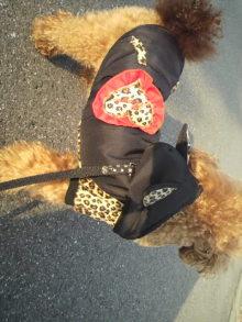 愛犬鈴ちゃんのライフスタイルブログ-2011022315460000.jpg