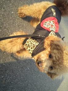 愛犬鈴ちゃんのライフスタイルブログ-2011022315460001.jpg