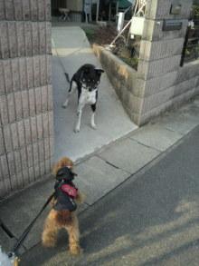 愛犬鈴ちゃんのライフスタイルブログ-2011022315440000.jpg
