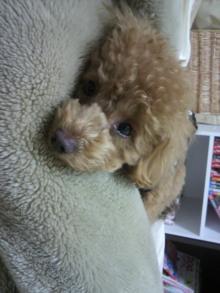 愛犬鈴ちゃんのライフスタイルブログ-2011022600120000.jpg