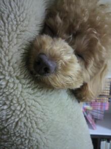 愛犬鈴ちゃんのライフスタイルブログ-2011022600130001.jpg