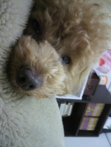 愛犬鈴ちゃんのライフスタイルブログ-2011022600130002.jpg