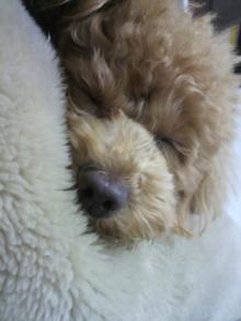愛犬鈴ちゃんのライフスタイルブログ-2011022600180000.jpg