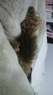 愛犬鈴ちゃんのライフスタイルブログ-2011022600300000.jpg