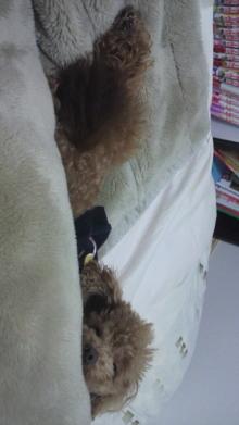 愛犬鈴ちゃんのライフスタイルブログ-2011022600300001.jpg