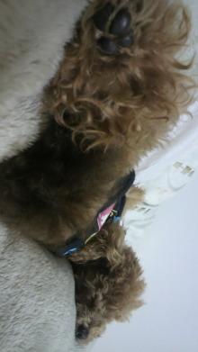 愛犬鈴ちゃんのライフスタイルブログ-2011022600310000.jpg