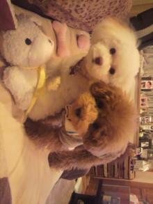 愛犬鈴ちゃんのライフスタイルブログ-2011010521480001.jpg